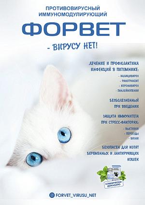 Фелис клуб кошек москва официальный сайт ночные клубы дискотеки 80 х в москве